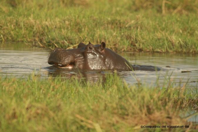 Poesia Chobe e Okavango BOTSWANA